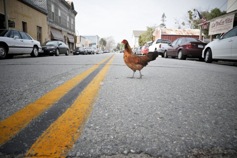 "Witty Answers of ""Why did the chicken cross the road"" Joke"